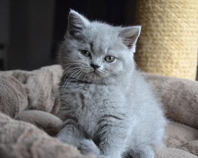 sterilisierte katze rollig